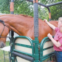 Dr. Roster performing acupuncture on a horse