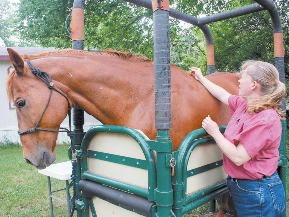 Dr. Roster performing acupuncture on a brown horse